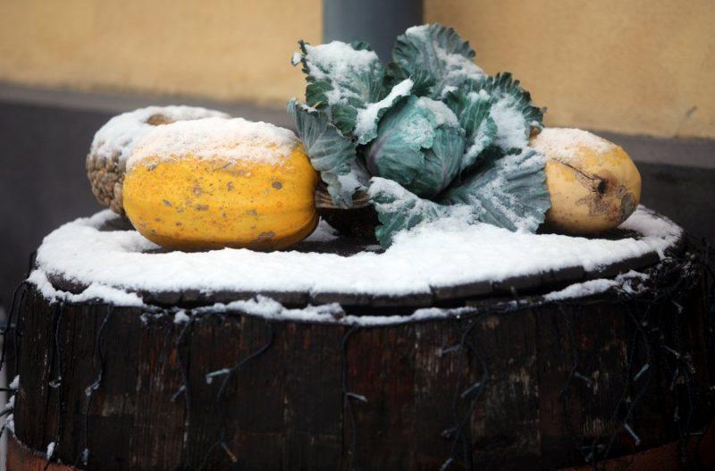 Dārzeņu dekors ziemā.