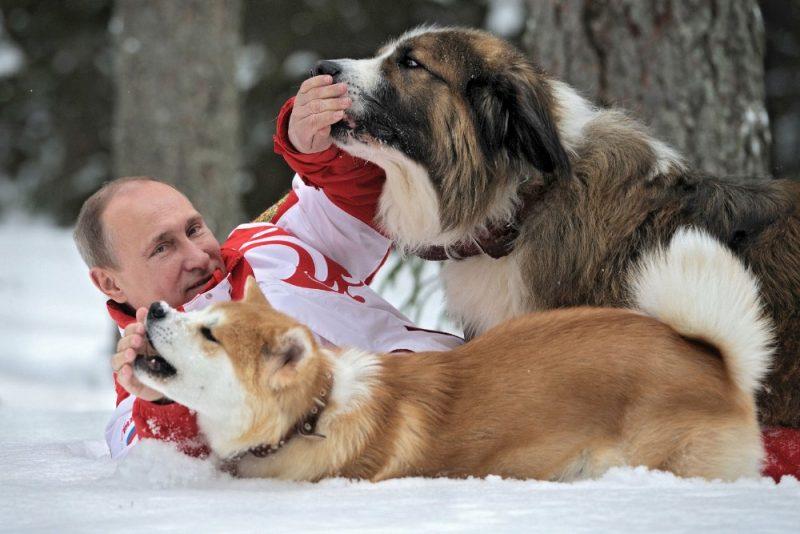 2013.gada martā V.Putins redzams ar savu japāņu un bulgāru kolēģu dāvanām – nu jau izaugušiem suņiem.