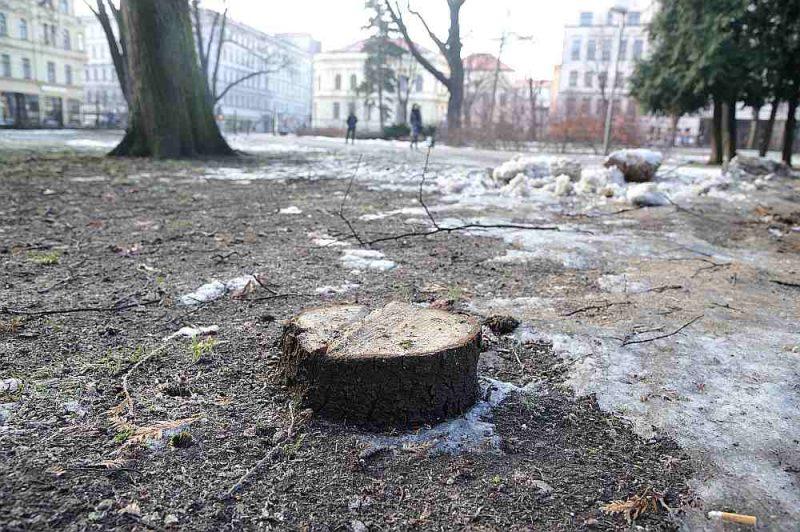 Līdz 25. februārim norit publiskā apspriešana par koku ciršanu Vērmanes dārzā. Parka apmeklētājus apdraud divas trupes bojātas kļavas, liepa, divas kalstošas asās egles, tūja. Kā redzams attēlā – viens koks jau nozāģēts, kaut sabiedriskā apspriešana par koku zāģēšanu šajā parkā vēl nav beigusies.