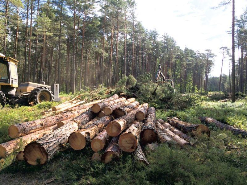 Latvijas valsts mežus cirtīs tikpat lielos apjomos kā līdz šim – sola jaunās valdības deklarācija.