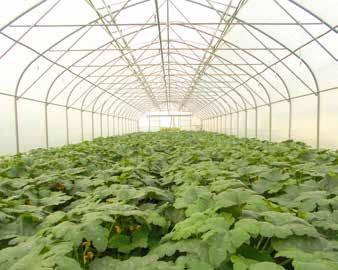 Angāra siltumnīcas no koka vai metāla konstrukcijas ir izplatītas nelielās saimniecībās.