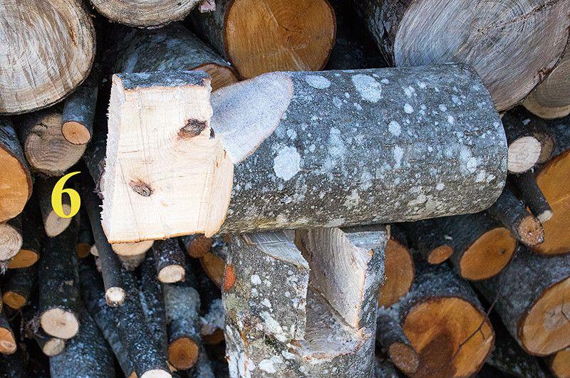 Atliek pārzāģēt otru sānu, un koks nogāzīsies vēlamajā virzienā krišanas laikā nesagriežoties, jo griešanos nepieļaus stumbra viducī palikušais koka bloks.