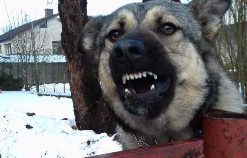 Nikns suns pie pastkastītes.
