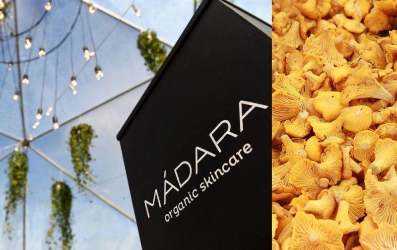 """AS """"MADARA Cosmetics"""" pētnieki sadarbībā ar Latvijas Universitāti atklājuši, ka gailenēm piemīt unikālas matu augšanu veicinošas īpašības."""