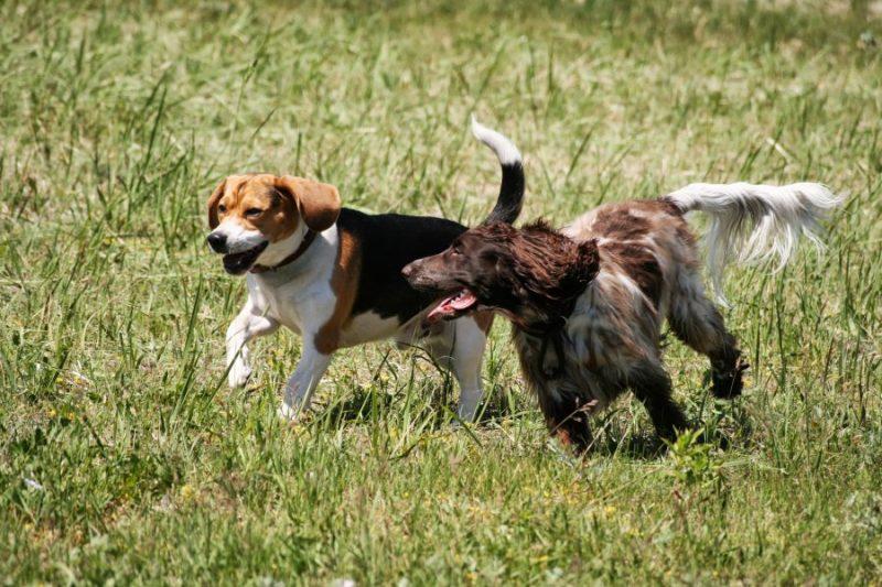 Pastaigas dod sunim iespēju izskrieties,  jo suņi ir sociālas būtnes