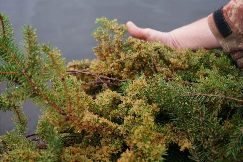 """Daugavā pie Mangaļsalas AS """"Latvenergo"""" zivju resursu atjaunošanas programmas ietvaros notiek lašu un taimiņu mazuļu ielaišana ,"""