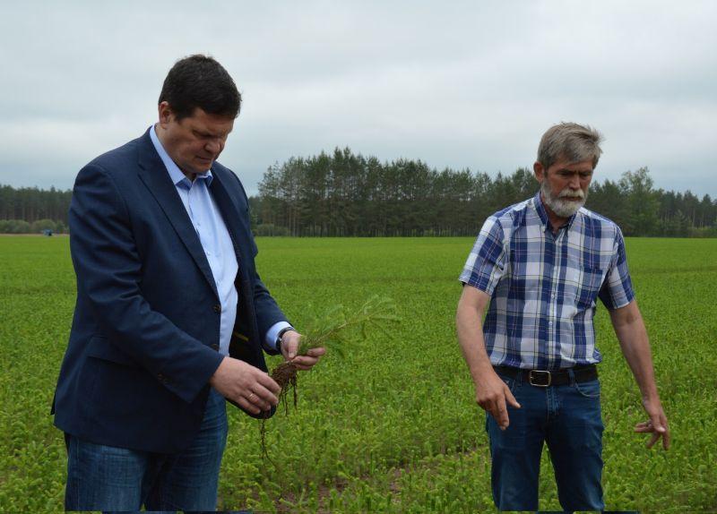 """Zemkopības ministrs Kaspars Gerhards un kokaudzētavas """"Podiņi"""" vadītājs Jānis  Siksalietis apskata egļu kailsakņu stādus ar uzlabotu sakņu sistēmu."""