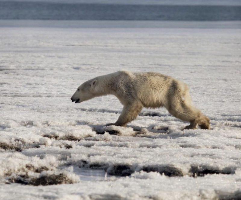 Ilustratīvs foto. Leduslācis Krievijā.