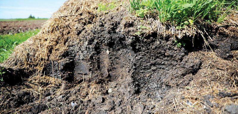 Augsne ir kas vairāk nekā tikai substrāts saknēm, tajā mīt neskaitāmi daudz dažādu dzīvo organismu.