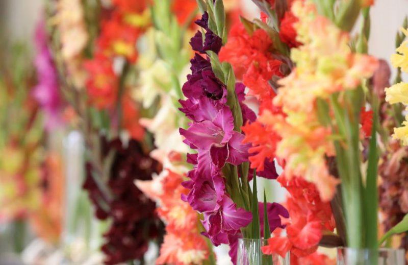 Latvijas Dabas muzejā apskatāmas vairāk nekā 180 ziedu šķirnes un to hibrīdi.