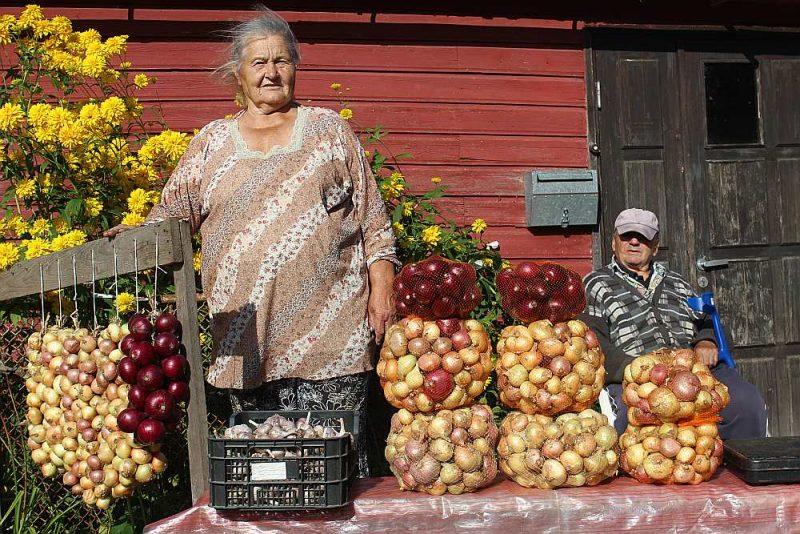 Sīpolu audzēšana ir Peipusa piekrastes iedzīvotāju tradicionālais rūpals, un ik rudeni ciematu ielas pārvēršas par sīpolu izstādi – pārdošanu.