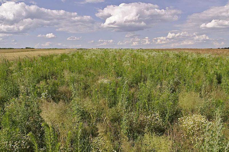 Nekoptas zemes īpašniekiem paredzēto naudas sodu apmēri būs atkarīgi no viņiem piederošo īpašumu platības.