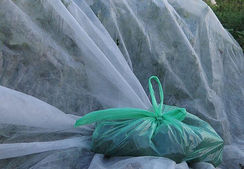 Lai nostiprinātu agroplēvi, lai to neaizpūš vējš, mazos maisiņos saliek zemes kukuržņus un novieto pa perimetru.