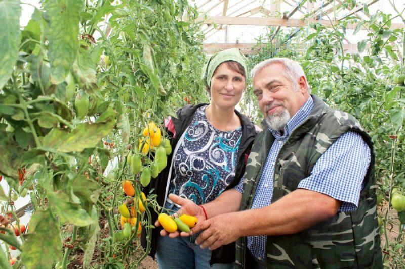 Nadežda un Aivars Ošenieki ar bioloģiskajām metodēm audzē dārzeņus un augļus, tostarp pašu būvētajā siltumnīcā – tomātus un citus dārzeņus.