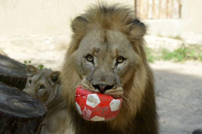 Zoodārzs svinēs 107. dzimšanas dienu