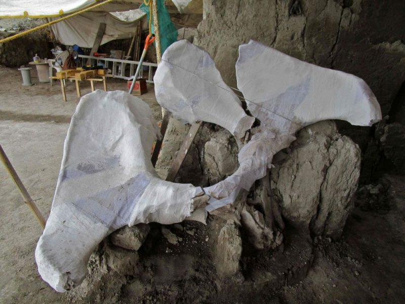 Meksikas arheologi trešdien paziņoja, ka ir atraduši līdz šim lielāko mamutu skeletu depozītu, kurā ir apmēram 800 kaulu no vismaz 14 izmirušo milžu īpatņiem.