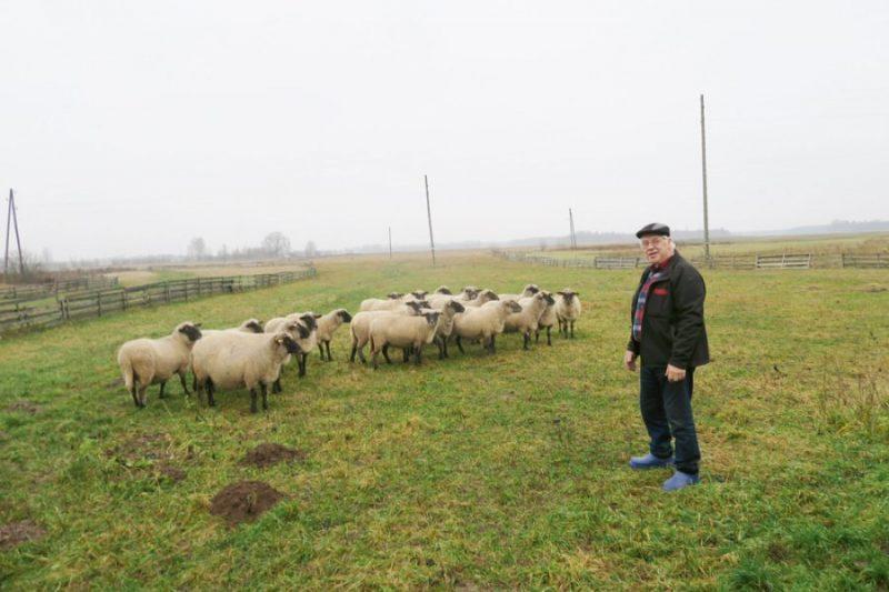 """"""" Vecvītiņu"""" saimnieki Indulis Irbe un Valentīna Irbe vienu no Latvijas labākajiem tīršķirnes ganāmpulkiem izveidoja bez ES fondu naudas atbalsta."""