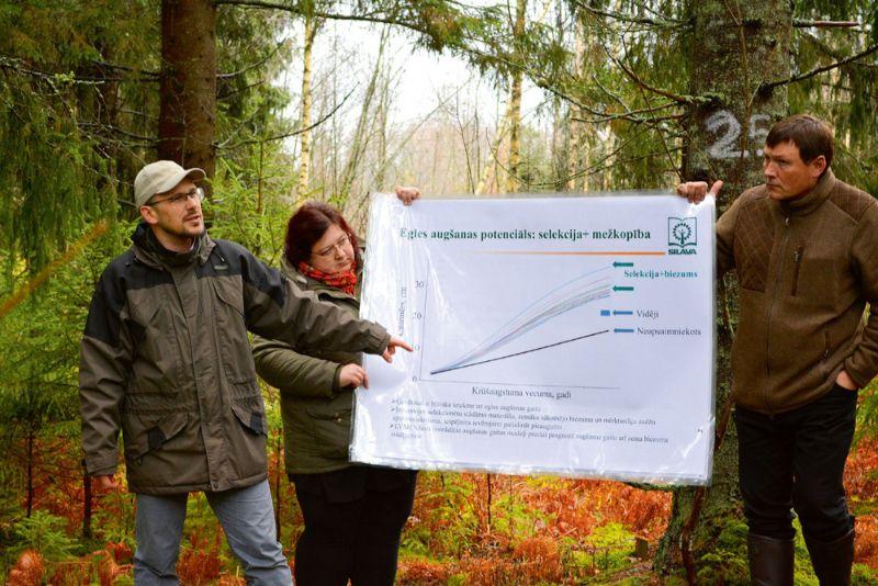 Āris Jansons rāda egles augšanu ietekmējošos faktorus.