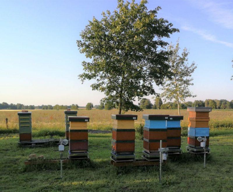 Bišu dravu attālinātais monitorings