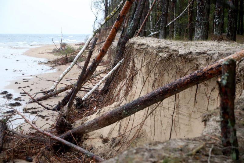 Vakarbuļļu pludmalē izgāztie koki.