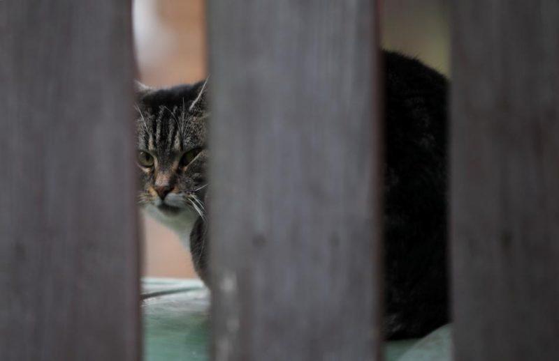 Kaķis kādā no Rīgas māju pagalmiem