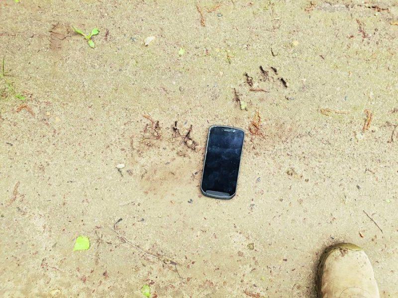Lāča pēdas nospiedums salīdzinājumā ar mobilo tālruni
