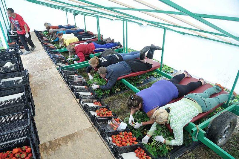 Krīzes dēl slēgtās robežas apdraud gan šīs sezonas lauksaimniecības darbus, gan arī liedz darbiniekus daudziem rūpniecības uzņēmumiem.
