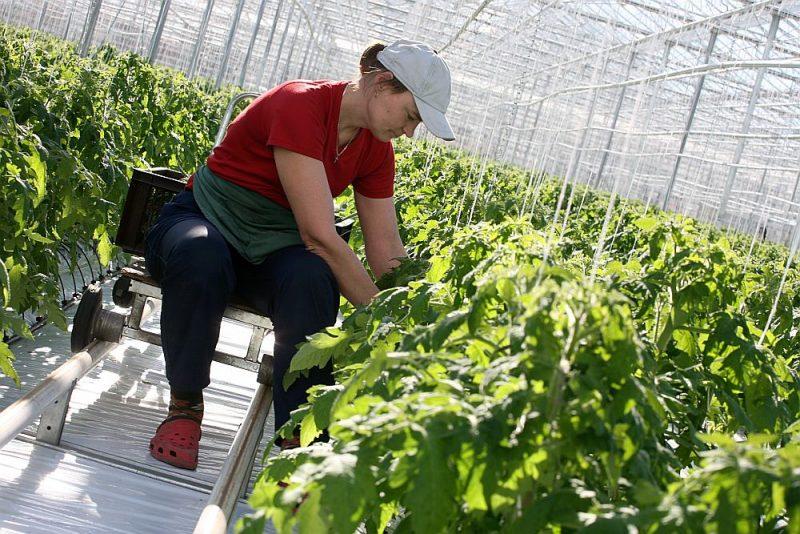 Pieaugusi arī cilvēku interese par siltumnīcām – tās jau tiek būvētas vai arī sagatavotas jaunajai stādīšanas sezonai. Zemnieku saeima arī aicina tirgotājus slēgt līgumus ar vietējiem zemniekiem par jaunās dārzeņu ražas piegādi.