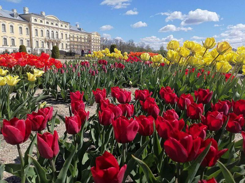 Rundāles pils franču dārzu publiskai apskatei atvērs no šodienas, bet daļēja muzeja ekspozīcija, tā dēvētais Mazais loks, apmeklētājiem tiks atvērts apskatei Starptautiskajā muzeju dienā 18. maijā.