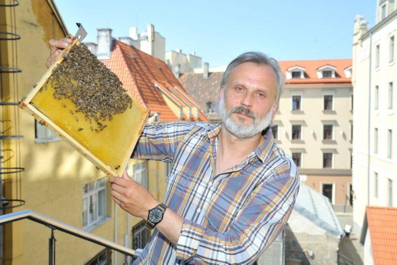 Uz Rīgas rātsnama 3. stāva āra terases izvieto trīs bišu stropus.