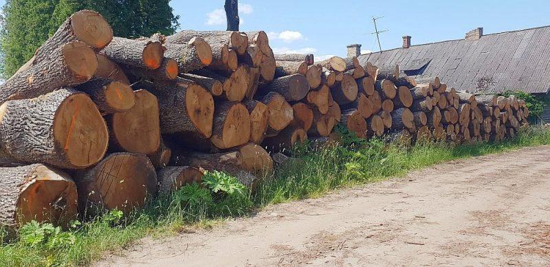 Kaudzēs sakrautie ozolu stumbri apliecina, ka nocirstie koki lielākoties bijuši veselīgi, bez īpašām bojājumu pazīmēm.