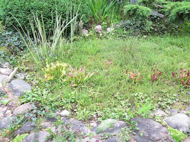 Šāds purviņš dārzā ir ne tikai eksotika.