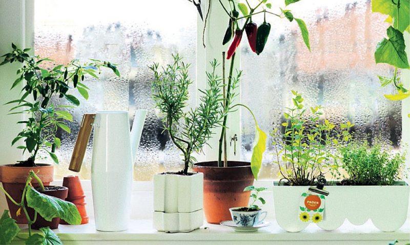 Istabas augi uzlabo gaisa kvalitāti un arī noskaņojumu.