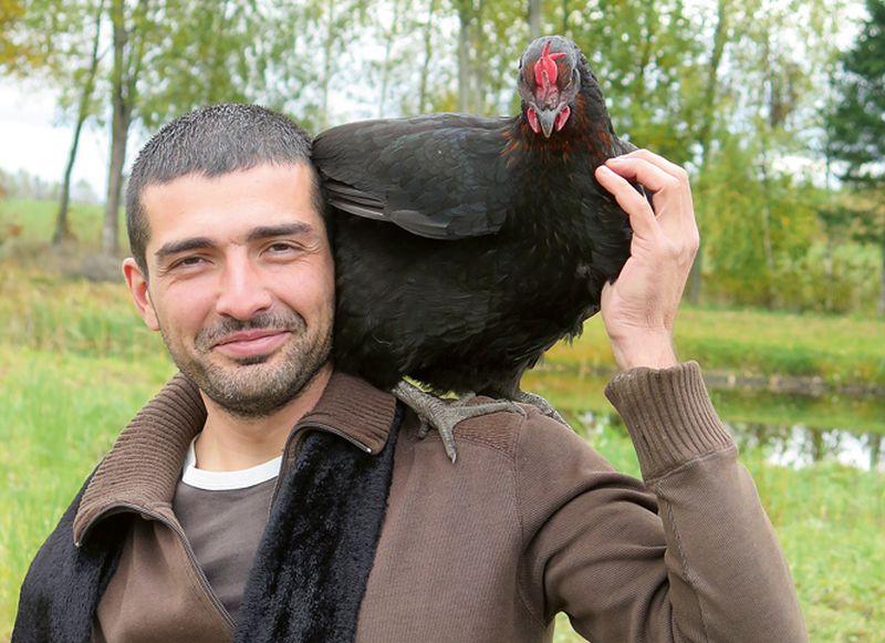 """""""Esam gatavi vistas turēt iekšā kūtī. Olas tirgojam uz vietas  saimniecībā, jau  pērn sapratām, ka tas izdevīgāk nekā izbraukuma tirdzniecībā, kuru jebkuru brīdi arī var aizliegt – te kovida, te putnu gripas dēļ,"""" teic  """"Indrānu dārzu"""" saimnieks Pāvels Mazjarkins."""
